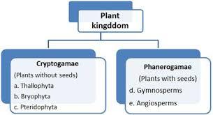 Plant Kingdom Class 11 Notes Biology Mycbseguide Cbse