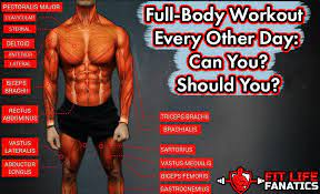 full body workout every other day can