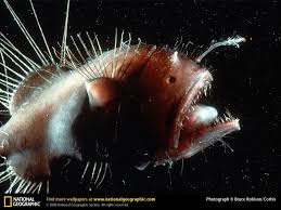 Image result for bioluminescence