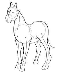 horse face drawing front. Brilliant Face Inside Horse Face Drawing Front A