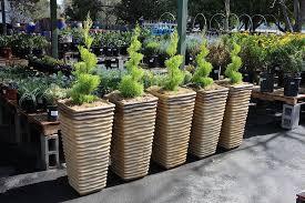 outdoor flower pots cheap. outdoor plants flower pots cheap