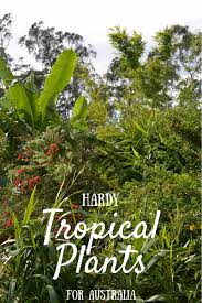 tropical plants and tropical gardens for hot dry climates lush blog tropical plants gardening australia