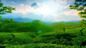... HDQ-Beautiful Green Landscape 2016 HQ Definition ...