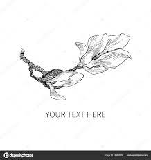 インク鉛筆葉マグノリアの花を分離しますライン アートの透明な