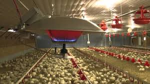 Resultado de imagen para campana, criadora pollos