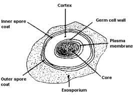 بسمه تعالی 3 باکتری جزوه ی جلسه ی باکتریها: اجزا سازنده برای بقا و رشد ب