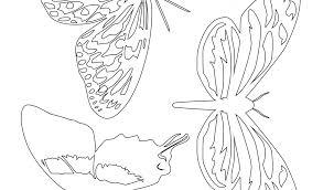 Sagome Di Farfalle Da Colorare E Ritagliare Per Bambini Con Disegni