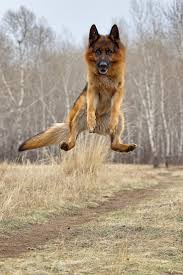 86 best Jumping animals. images on Pinterest