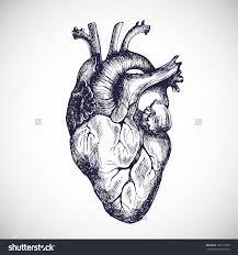 real human heart tattoo real human heart diagram real wiring diagram and