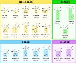 Amino Acids Bioninja