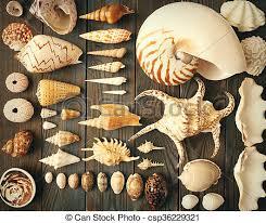 Seashell Collection