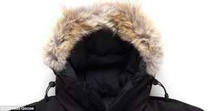 The softer side  While Canada Goose uses coyote fur on the coats  hoods,