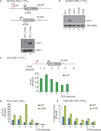 Histone Deacetylation Promotes Transcriptional Silencing At