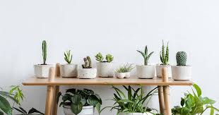 how to grow and take care of indoor plants