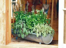 container herb garden ideas lead