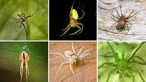 Spider Web Identification Chart 21 Common Uk Spiders You Might Find This Autumn Metro News