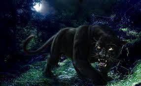 71+] Black Jaguar Wallpaper on ...