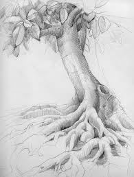 realistic apple tree drawing. Contemporary Apple Realistic Apple Tree Drawing Intended V
