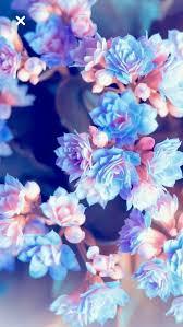 Summer blossoms #blossoms #fondos #Summer Summer blossoms #blossoms #fondos  #Summer The post … | Pretty wallpapers, Floral wallpaper, Cute wallpaper  backgrounds