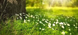 Grass and flowers background Blue Sky Green Grass Picture Grass Flower In The Morning Background Kidskunstinfo Pictures Of Grass With Flower Background Kidskunstinfo