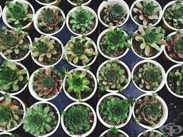 Предлагаме ви няколко стайни растения, които всеки може да се запази живи и алоето харесва стайни температури около 21 градуса по целзий и много слънце. 18 Stajni Rasteniya Za Nachinaeshi Gradinari Chast 1 Lifestyle Framar Bg