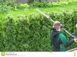 hedge cutting petrol hedge trimmer