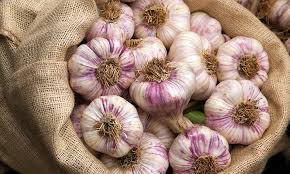 will 50 cloves of garlic kill your cold or just your love life daily mail