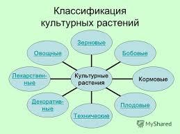 Презентация на тему МНОГООБРАЗИЕ КУЛЬТУРНЫХ РАСТЕНИЙ  3 Классификация культурных