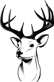 Deer Drawing Sketch Deer Horns Png Download 2091 3166
