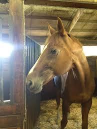 international lesson horse day essay winner cinema horse nation