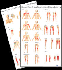 Pain Referral Patterns Best Ligament Pain Referral Patterns