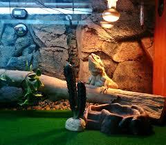 bearded dragon basking a heat lamp
