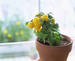 Outdoor And Garden Container Garden Ideas Annuals Image  The New Container Garden Plans Tomatoes