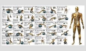 Free Exercise Ball Chart 74 Unfolded Exercise Fitness Chart