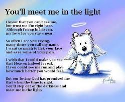 Pet Quotes Delectable Tasty All Dogs Go To Heaven Quotes And Poem Pet Care Pinterest Plus