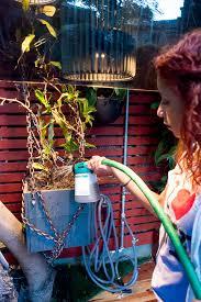 garden homemade liquid kelp fertilizer