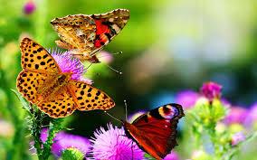 Beautiful butterflies, Butterfly wallpaper
