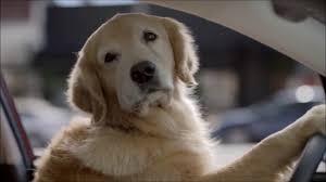 2018 subaru dog commercial. exellent commercial funny subaru dog tested commercial  bad day at the hair salon inside 2018 subaru dog commercial