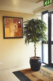 office plant displays.  Office Plant For A Foyer Images Of Artificial Office Displays On Ledge  Ideas Kitchen Plants