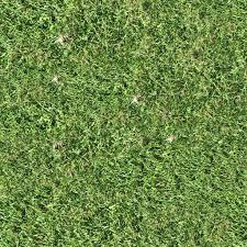 wild grass texture. Park Pavement Grass.jpg Wild Grass Texture