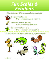 Fur Scales And Feathers Identifying Animals Lesson Plan