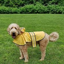 Thinkpet Outdoor Dog Raincoat Detailed Review Dog