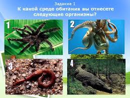 Схема из слов среда обитания водная среда наземная среда среда обитания реферат