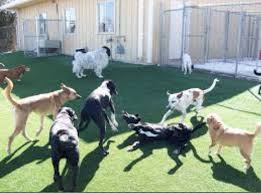 dog boarding training services