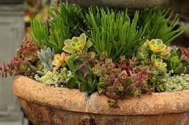 Succulent Garden Designs Adorable How To Plant Beautiful Succulent Gardens In 48 Easy Steps A Piece