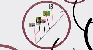 Blue Jay Robin Cardinal Finch And Pelican Taxonomy Chart Brainliesttt Asap Describe The Physical Traits Your Birds