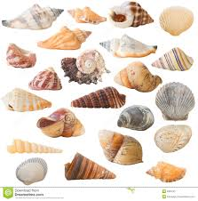 sea shells collection shell collection isolated stock image image of spiral 3359727