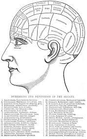 Phrenology Chart Poster Phrenology Chart Poster 2019