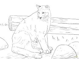 mountain lion coloring sheet page pages printable free