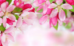 flower wall paper download nature spring pink flower hd wallpaper download